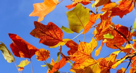 Autumn-Leaves-Widescreen-Wallpapers